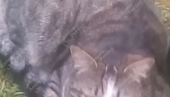 Photo du chat trouve le 03/05/2019